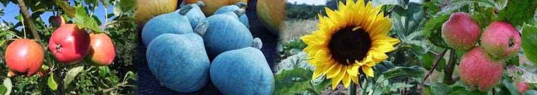 Lærkehøj Økologisk Frugt