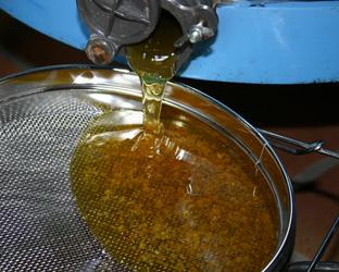 honning-slynge-2